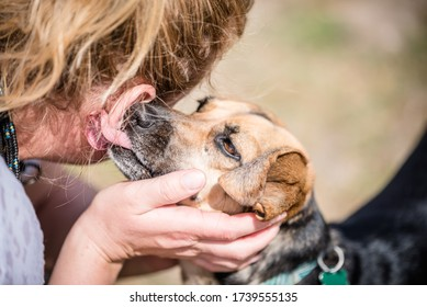 Cute dog licking owners ear