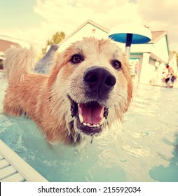 a cute dog at a local public pool toned with a retro vintage instagram filter effect