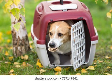 Cute dog looking out from plastic carrier on grass in park with paper in mouth