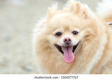 Cute dog looks at camera.