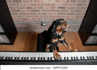 A cute dog looks like she's a deejay mixing music at a synthesizer at a house party. The dog is a Cavalier King Charles Spaniel, black and tan.