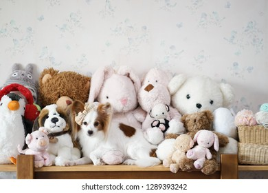 Cute dog. A cute dog is lying among the stuffed animal plush dolls. Soft focus on the dog's eye. Dog is pure breed Continental Toy Spaniel Papillon.