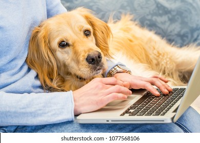 Cute dog lying on owners lap while she is working