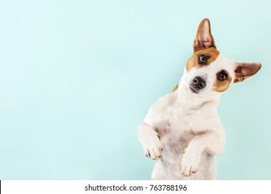 Cute dog. Lying pet. Copy space.