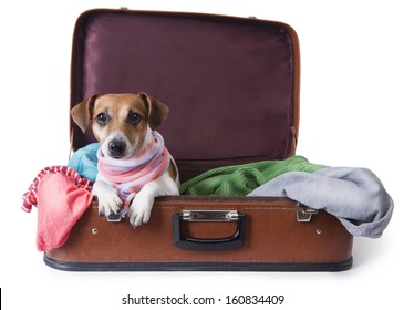 Cute dog lying in a suitcase for traveling with brightly colored things inside of it with a stylish pink scarf around her neck. Take me with you on vacation. White background