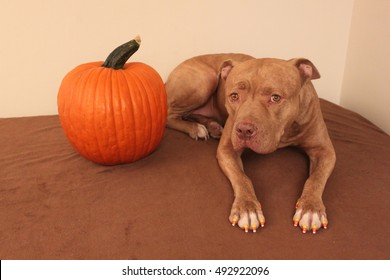 Cute dog with nails painted like candy corn