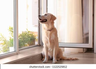 Cute dog near open window at home