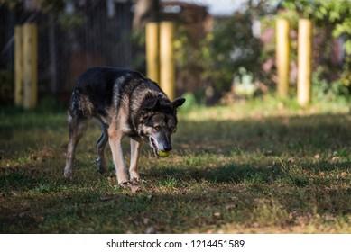 Cute dog on atumn background