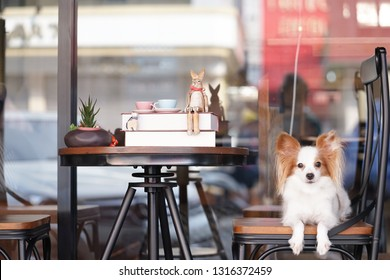 Cute dog on a chair. Pure breed dog : Continental Toy Spaniel Papillon on a vintage chair. Books and teacups on the table.