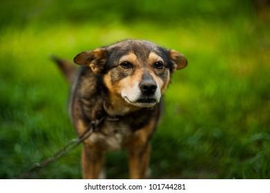 cute dog on grass
