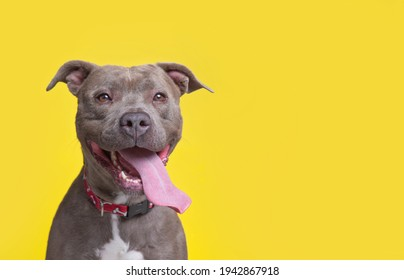 cute dog on an isolated background