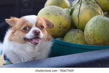 cute dog on pickup
