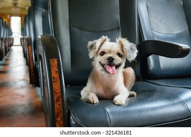 The cute Dog on the train