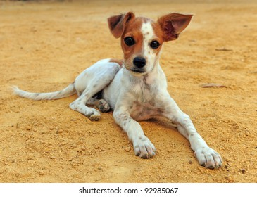 Cute Dog with one ear up