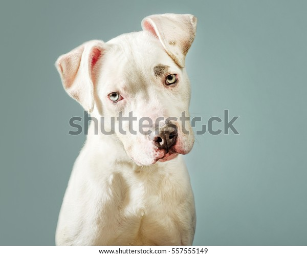 cute dog over blue