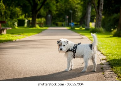A cute dog is in the park.