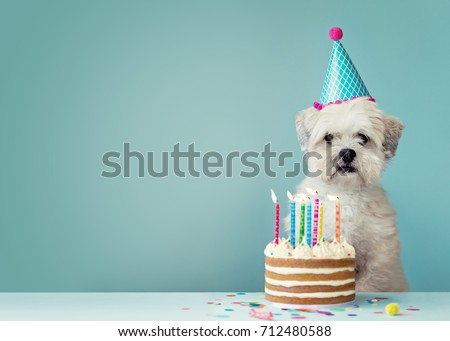 cute dog party hat birthday cake の写真素材 今すぐ編集 712480588