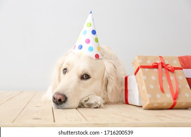 Cute dog in party hat and with gifts on light background