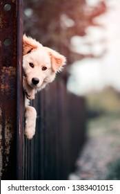 Cute dog peeking over the fence