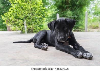 Cute dog play, Black dog