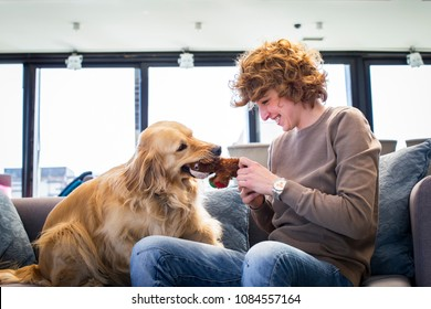 cute dog playing with his owner on sofa