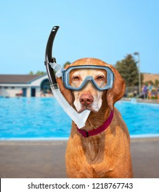 cute dog playing at a public pool on a hot summer day with a scuba mask and snorkel