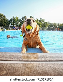 a cute dog playing at a public pool and having a good time during the summer vacation holiday