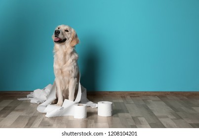 Cute dog playing with rolls of toilet paper on floor against color wall. Space for text