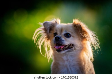 Cute dog portrait in beautiful light in the garden