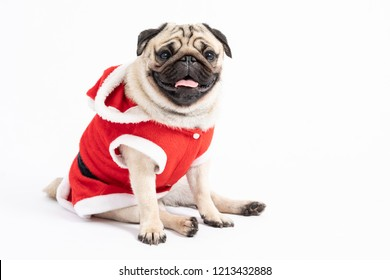Cute Dog Pug Breed in Red Santa coat Costume sitting smile and happiness in Christmas and new year day isolated on white background,Healthy Purebred dog  with Christmas concept