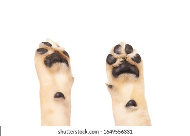 cute dog puppy paw showing pads on white background