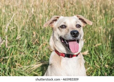 A cute dog ready to play / A playful dog