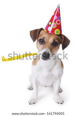 Cute Dog In Red Party Hat Designed Colored Circles With Yellow Noise Maker Wishes Happy Birthday White Background Studio Shot
