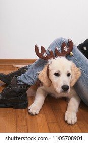 Cute dog with reindeer horns. Christmas is coming
