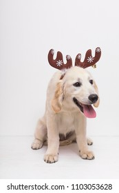 Cute dog with reindeer horns ready for Christmas