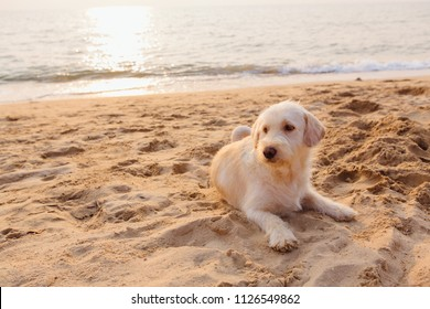 Cute dog relaxing on the sandy beach during sunset