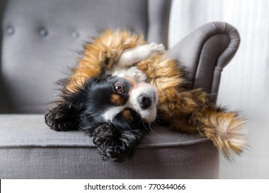 Cute dog relaxing under furry warm cover
