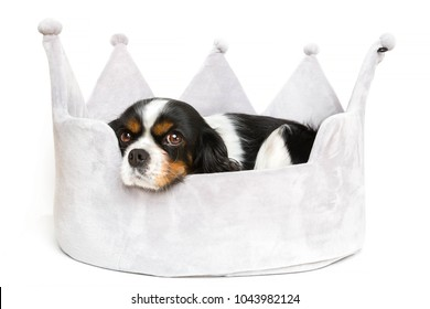 Cute dog resting in comfortable bed, isolated on white background