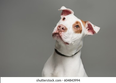 cute dog with room for type