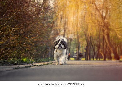 Cute dog running along the path in the Park