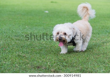 Cute Dog Running Around Lawn Stock Photo Edit Now 300914981
