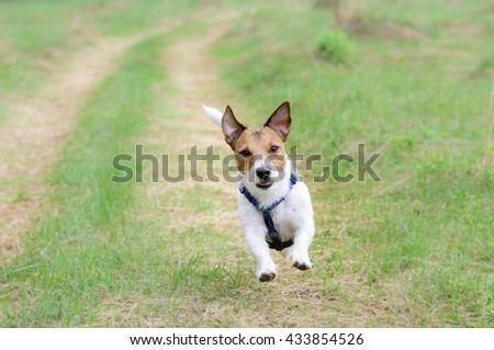 Cute Dog Running By Country Road Stock Photo Edit Now 433854526