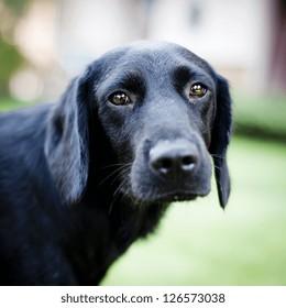 Cute dog sad dog