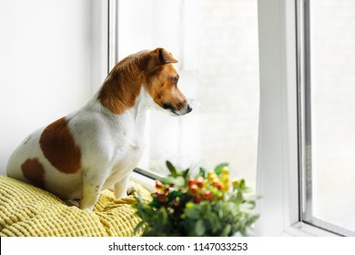 Cute dog is siting on the window and waiting for the owner.