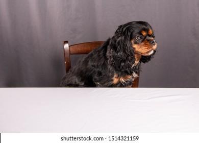 Tabletop Drink Coaster Sitting Cavalier King Charles Tri Color 1