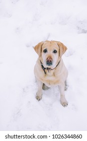 A cute dog sits on a white background top view close-up