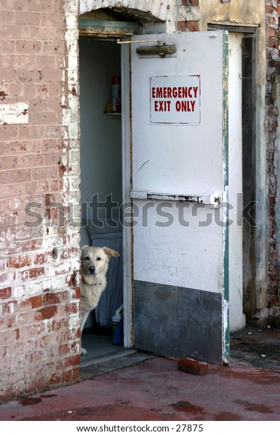a cute dog sits in an open doorway watching me take its photograph