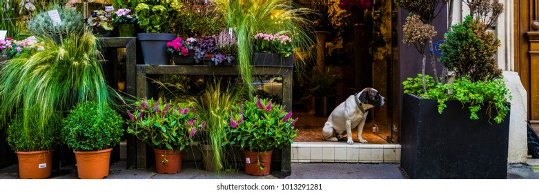 Cute dog sitting in the door of a flower shop in Paris
