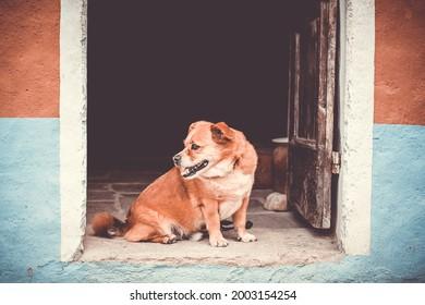 süßer Hund sitzt auf dem Weg