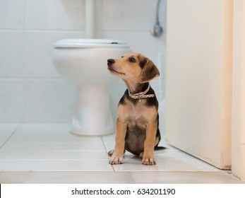 Cute dog sitting in front of toilet